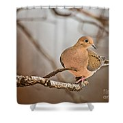Mourning Dove Pictures 71 Shower Curtain