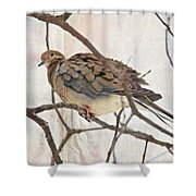 Mourning Dove - Sing No Sad Song For Me #2 Shower Curtain