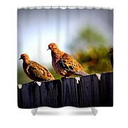 Mourning Doves On Fence Shower Curtain