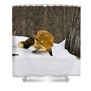 Mousing Shower Curtain