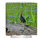 Mouthy Moorhen Shower Curtain