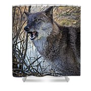 Move Back Shower Curtain
