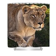 Moving In Shower Curtain