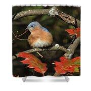 Mr Bluebird Shower Curtain