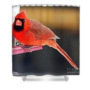 Mr. Cardinal Shower Curtain