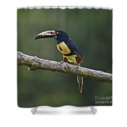 Mr. Colorful.. Shower Curtain