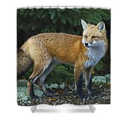 Mr. Fairy Tale.. Shower Curtain