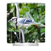 Mr Jay Shower Curtain