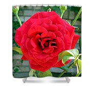 Mr Lincoln Rose Shower Curtain