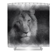 Mr Lion Photo Art 01 Shower Curtain