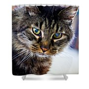 Mr. Lynx - Tabby - Cat Shower Curtain