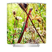 Mr Mantis Shower Curtain
