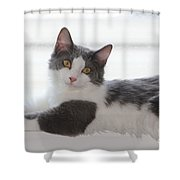 Mr. Scarlow Shower Curtain