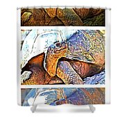 Mr. Tortoise Vertical Triptych Shower Curtain