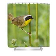 Mr Yellowthroat Shower Curtain