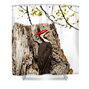 Mr.pileated Poses Shower Curtain