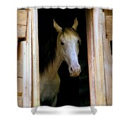 Mrs. Ed Shower Curtain by Karen Wiles