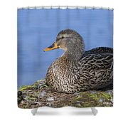 Mrs. Mallard Shower Curtain