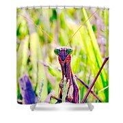 Mrs Mantis Shower Curtain