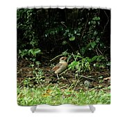 Ms Cardinal Picking Berries Shower Curtain
