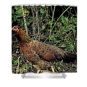 Ms. Chicken Shower Curtain