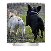 Ms. Quiggly And Buddy French Bulldogs Shower Curtain