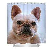 French Bulldog Seriously Shower Curtain