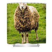 Mt Angel Abbey Sheep - Oregon Shower Curtain