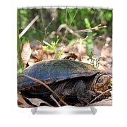 Mud Turtle Shower Curtain