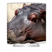 Muddy-faced Hippo Shower Curtain