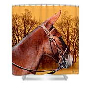 Mule Days - Westmoreland Tn  9-28-13 Shower Curtain