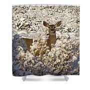 Mule Deer   #0061 Shower Curtain