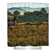 Mule Deer At De Weese Reservoir Shower Curtain