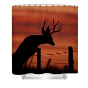 Mule Deer Buck Jumping Fence At Sunset Shower Curtain