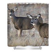 Mule Deer Does Shower Curtain