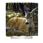 Mule Deer Fawn - A Quiet Place Shower Curtain by Crista Forest