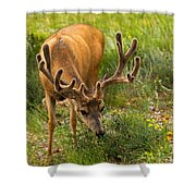 Mule Deer In Beaver Meadows In Rocky Mountain National Park Shower Curtain