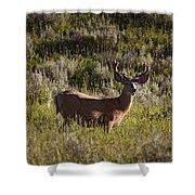 Mule Deer In Velvet   #2114 Shower Curtain