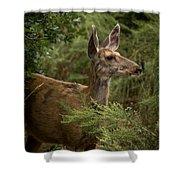 Mule Deer On Alert Shower Curtain