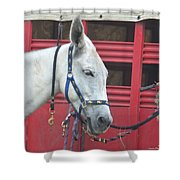 Mule Head Shower Curtain