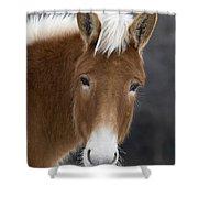 Mule Shower Curtain