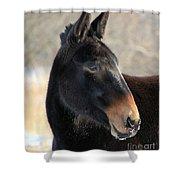 Mule Portrait 2 Shower Curtain