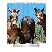 Mules On Alonissos Island Shower Curtain