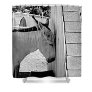 Mules Shower Curtain