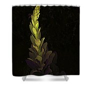 Mullein 2013 Shower Curtain