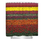 Mult-colored Tulip Field Shower Curtain