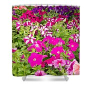 Multi-colored Blooming Petunias Background Shower Curtain