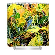 Multi-colored Croton Shower Curtain