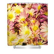 Multi-colored Daisies Shower Curtain