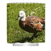 Multi-colored Paridise Duck Shower Curtain